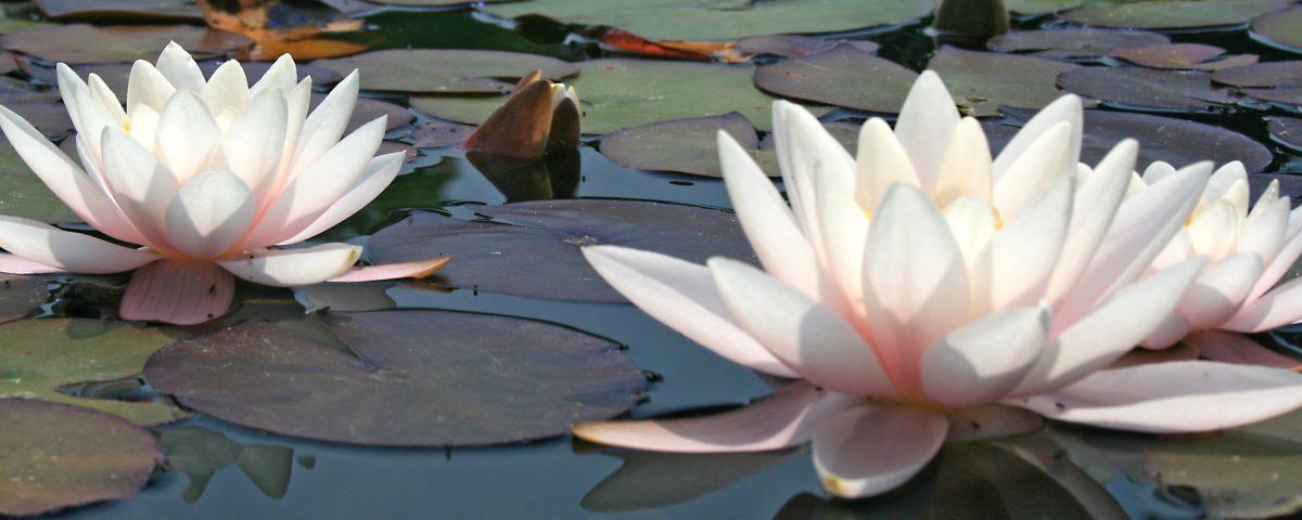 The Lotus Spa Salon